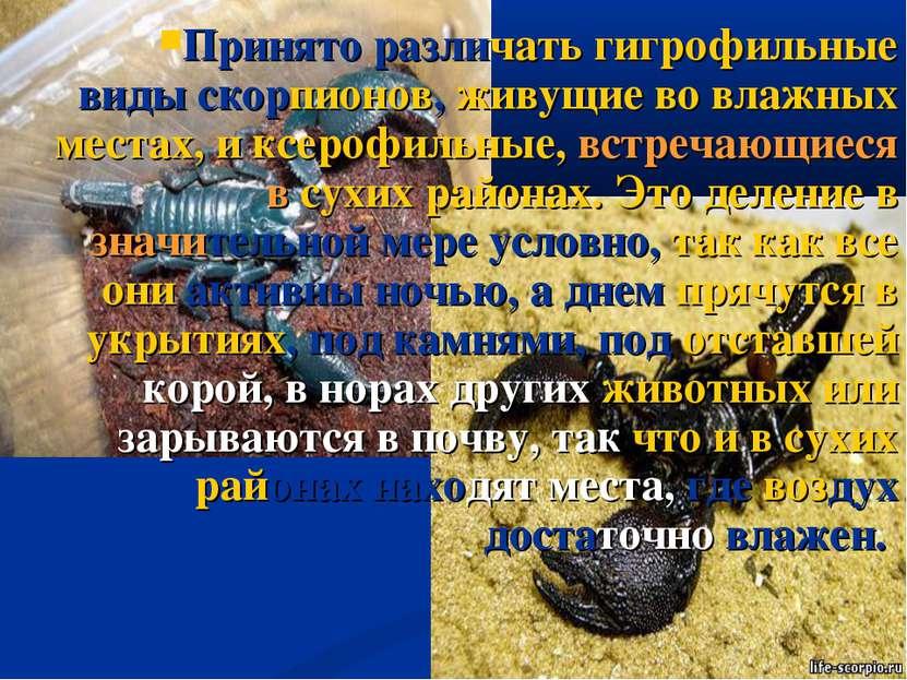 Принято различать гигрофильные виды скорпионов, живущие во влажных местах, и ...