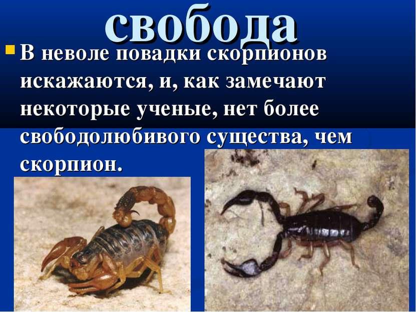 свобода В неволе повадки скорпионов искажаются, и, как замечают некоторые уче...