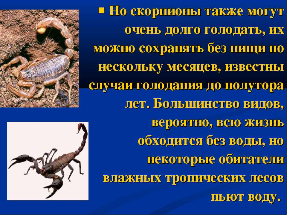 Но скорпионы также могут очень долго голодать, их можно сохранять без пищи по...