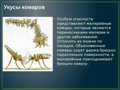 Особую опасность представляют малярийные комары, которые являются переносчика...