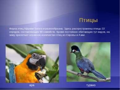 Птицы турако Фауна птиц Африки богата и разнообразна. Здесь распространены пт...