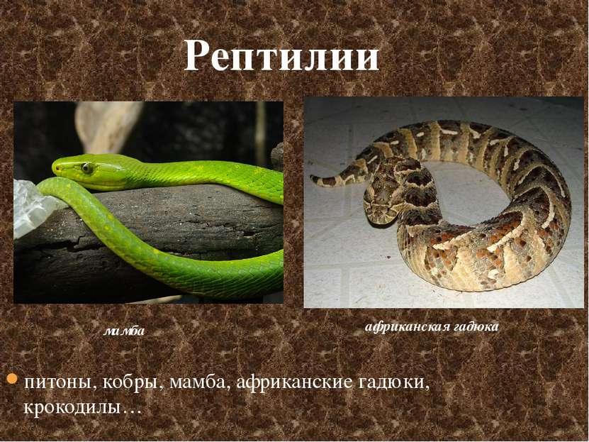 мамба африканская гадюка Рептилии питоны, кобры, мамба, африканские гадюки, к...