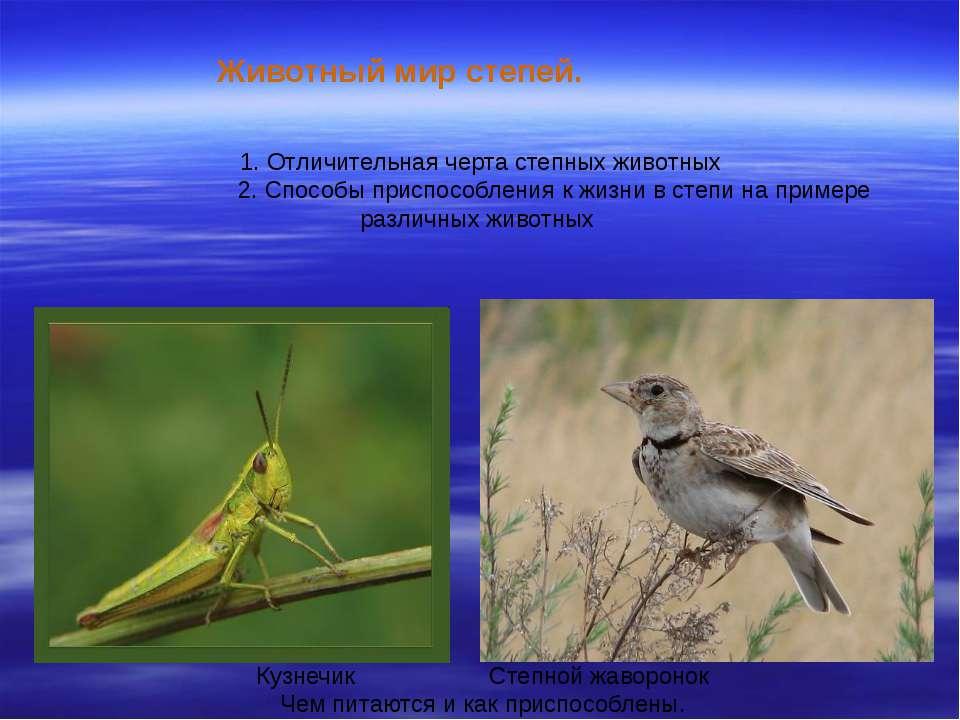 Животный мир степей. 1. Отличительная черта степных животных 2. Способы присп...