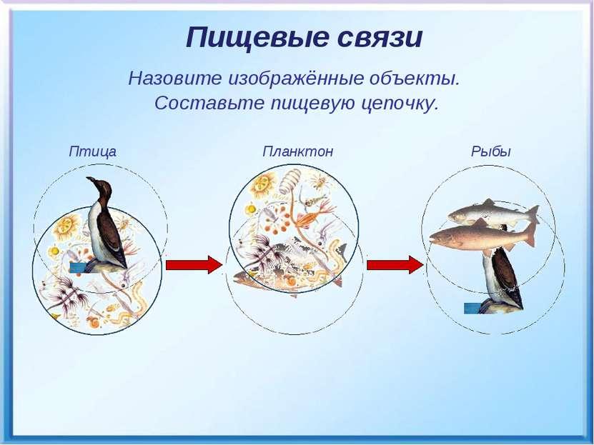 Птица Планктон Рыбы Пищевые связи Назовите изображённые объекты. Составьте пи...
