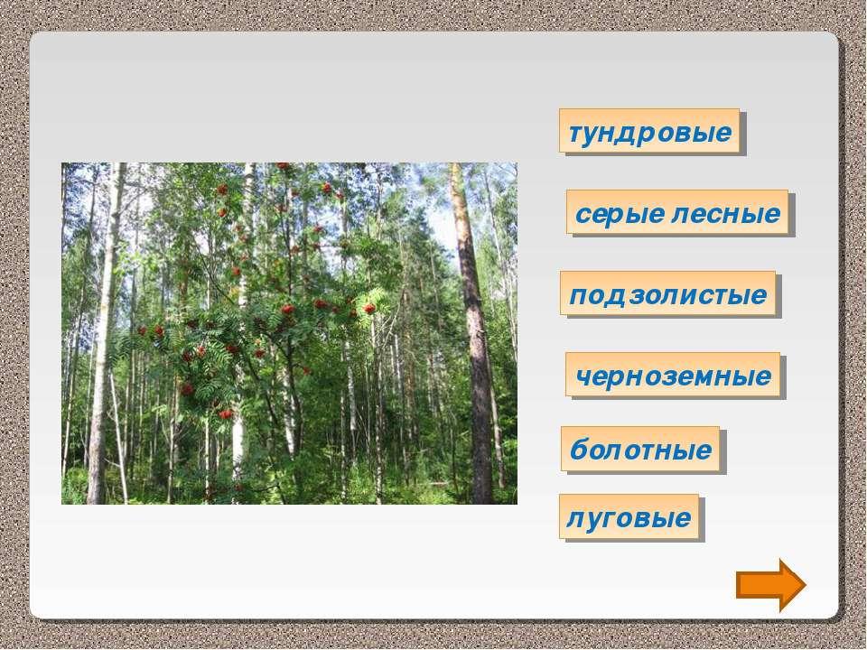 тундровые серые лесные подзолистые черноземные болотные луговые