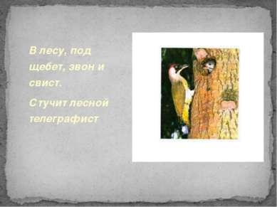 В лесу, под щебет, звон и свист. Стучит лесной телеграфист.
