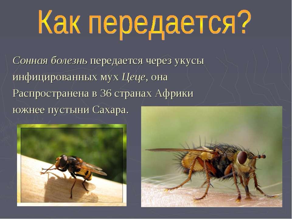 Сонная болезнь передается через укусы инфицированных мух Цеце, она Распростра...