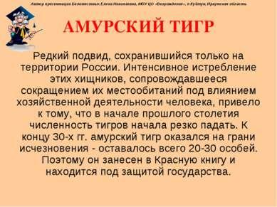 АМУРСКИЙ ТИГР Редкий подвид, сохранившийся только на территории России. Интен...