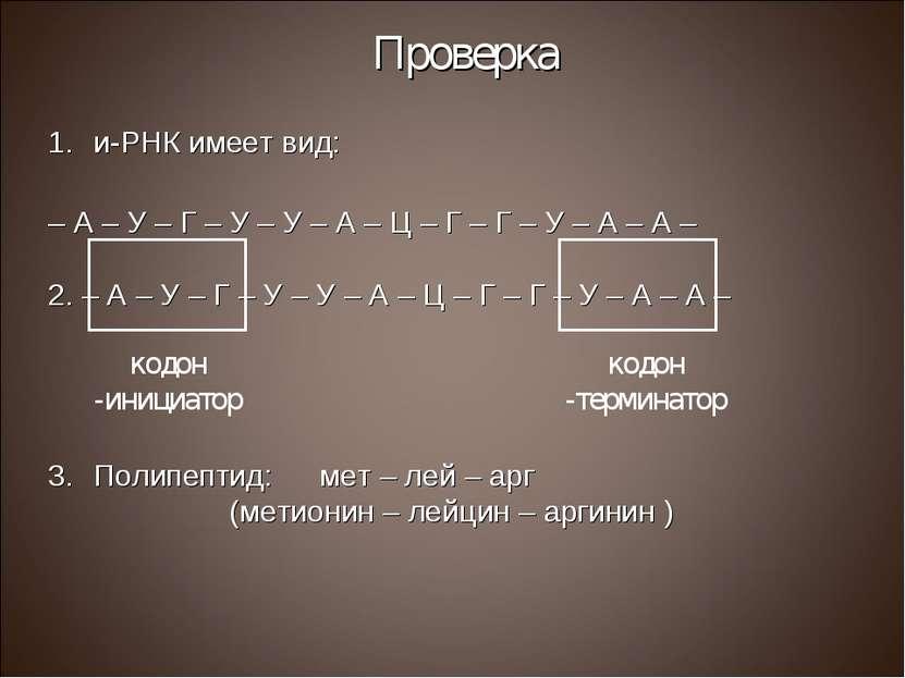 Проверка и-РНК имеет вид: – А – У – Г – У – У – А – Ц – Г – Г – У – А – А – 2...