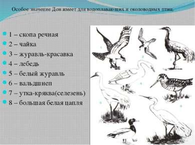 1 – скопа речная 2 – чайка 3 – журавль-красавка 4 – лебедь 5 – белый журавль ...