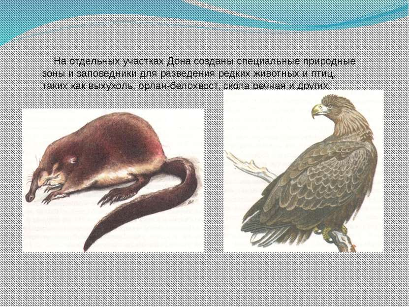 На отдельных участках Дона созданы специальные природные зоны и заповедники д...
