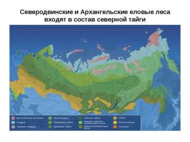 Северодвинские и Архангельские еловые леса входят в состав северной тайги