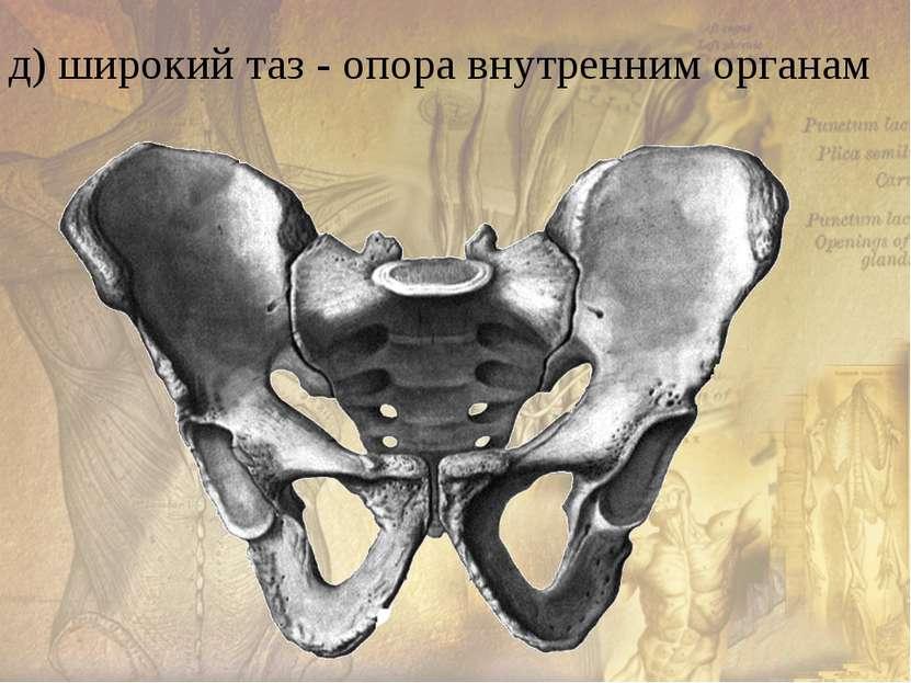е) массивные кости нижней конечности, сводчатая стопа
