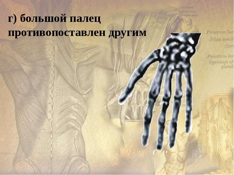 д) широкий таз - опора внутренним органам