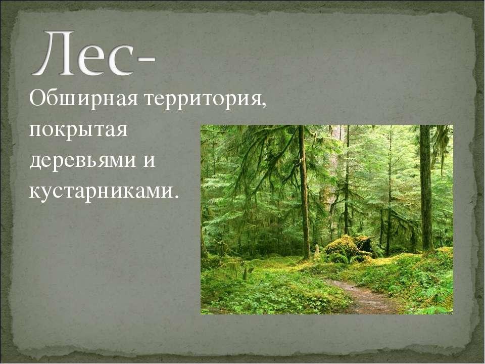 Обширная территория, покрытая деревьями и кустарниками.