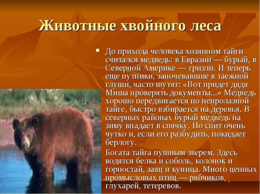 Животные хвойного леса До прихода человека хозяином тайги считался медведь: в...