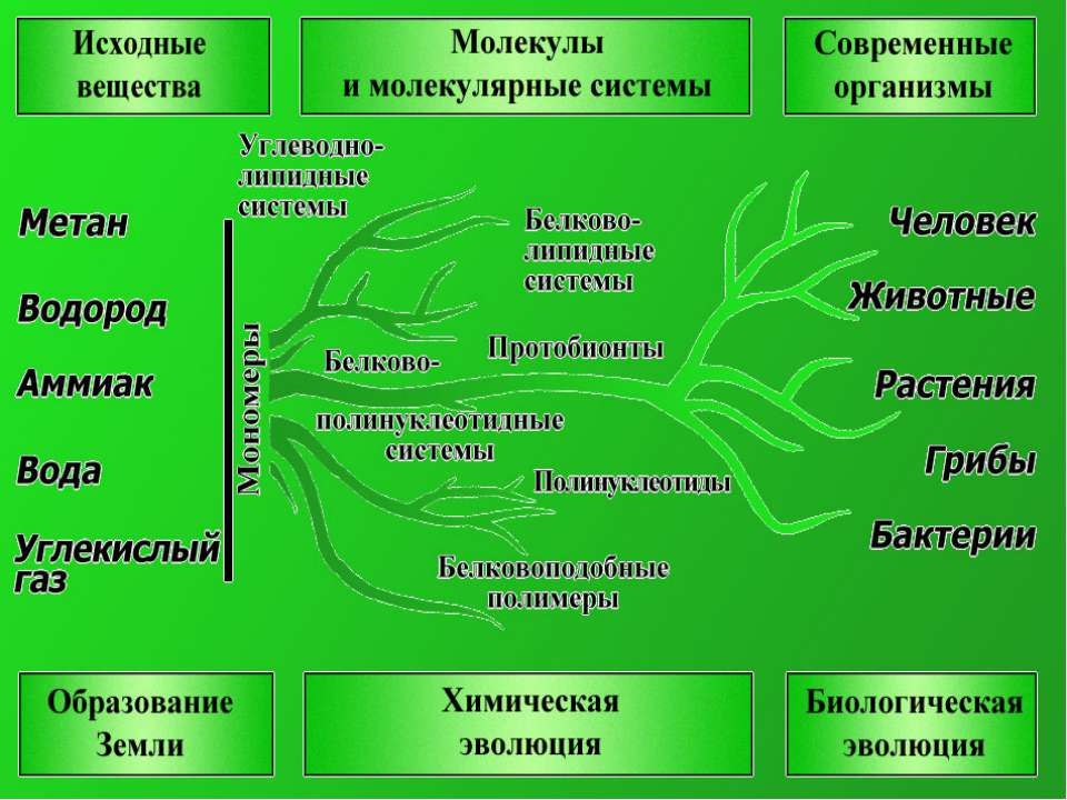 Здесь, на вклейке к статье животные - механизм биосферы, художники р варшамов и в логинов показали, как многолика роль животных в круговороте вещества, в жизни природы