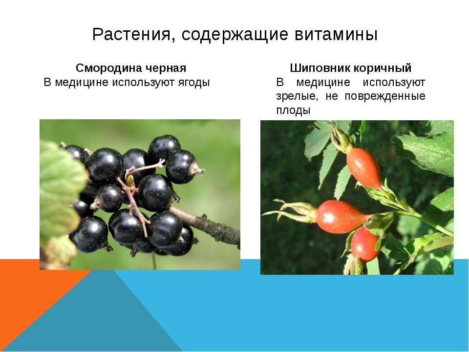 Растения, содержащие витамины Смородина черная В медицине используют ягоды Ши...