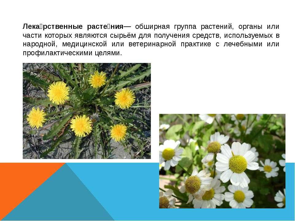Лека рственные расте ния— обширная группа растений, органы или части которых ...
