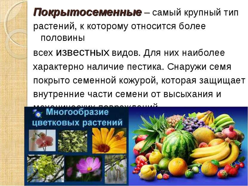 Покрытосеменные – самый крупный тип растений, к которому относится более поло...