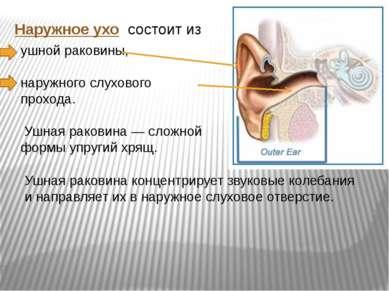Наружное ухо состоит из ушной раковины, наружного слухового прохода. Ушная ра...