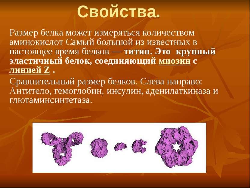 Свойства. Размер белка может измеряться количеством аминокислот Самый большой...
