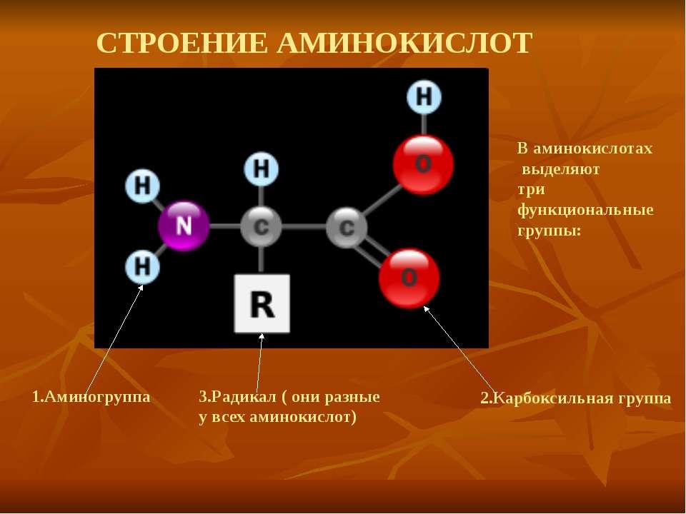 СТРОЕНИЕ АМИНОКИСЛОТ В аминокислотах выделяют три функциональные группы: 1.Ам...