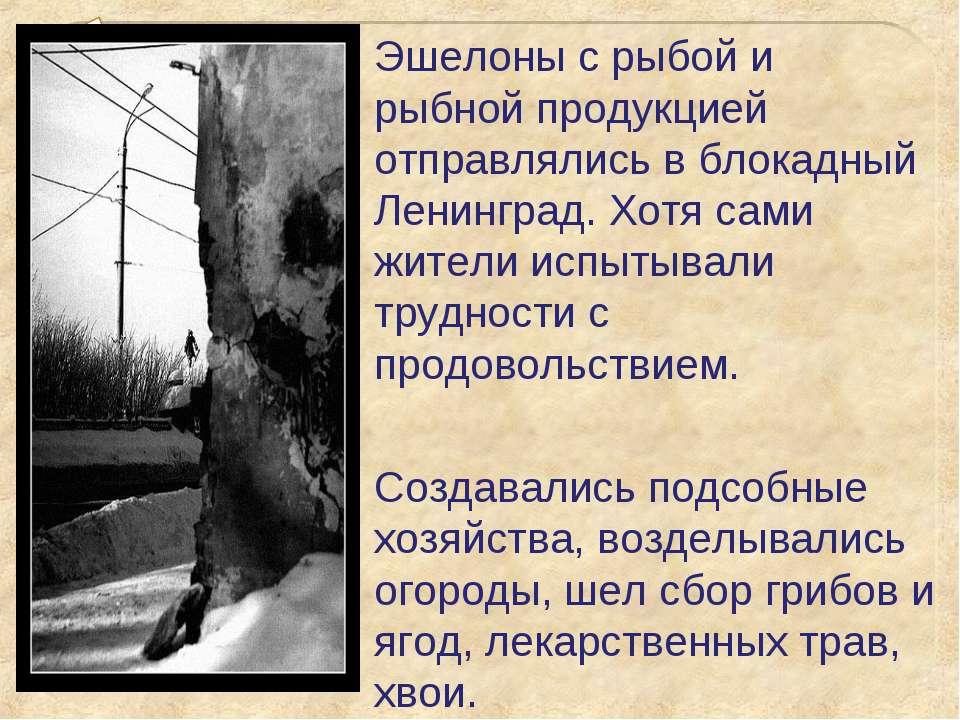 Эшелоны с рыбой и рыбной продукцией отправлялись в блокадный Ленинград. Хотя ...