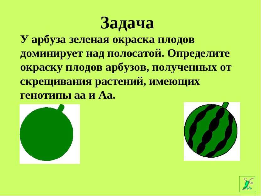 У арбуза зеленая окраска плодов доминирует над полосатой. Определите окраску ...