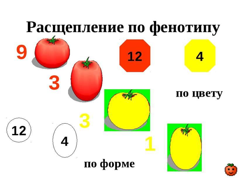 Расщепление по фенотипу 9 3 3 1 12 по цвету 4 по форме 12 4