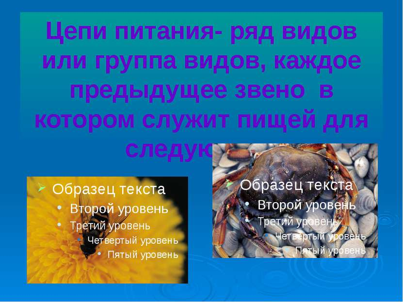 Цепи питания- ряд видов или группа видов, каждое предыдущее звено в котором с...