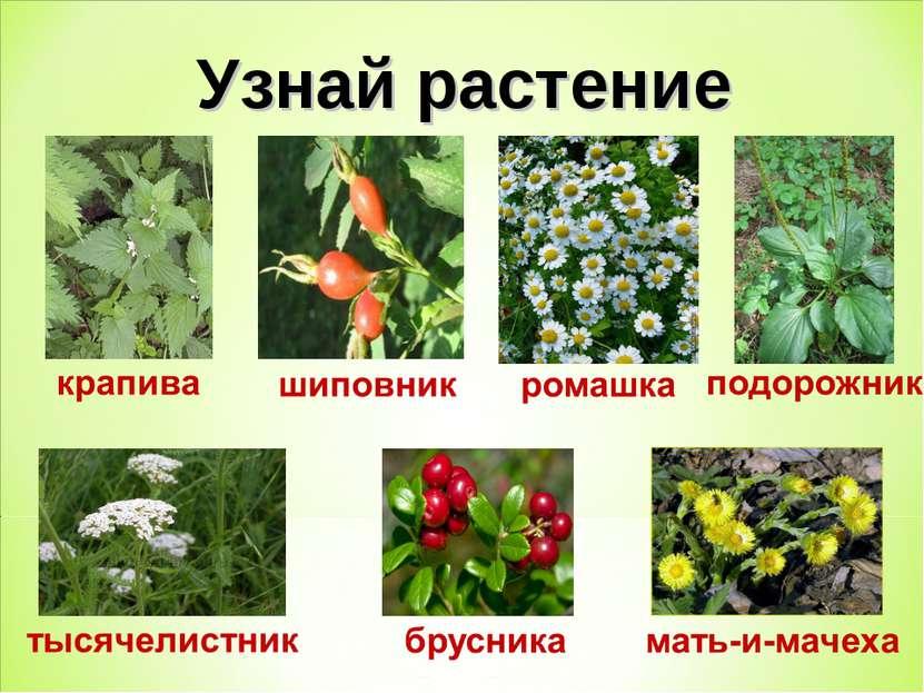 Узнай растение