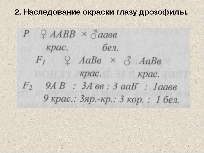 2. Наследование окраски глазу дрозофилы.