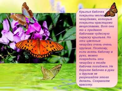 Крылья бабочек покрыты мелкими чешуйками, которые покрыты красящими веществам...