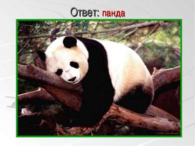 Ответ: панда панда