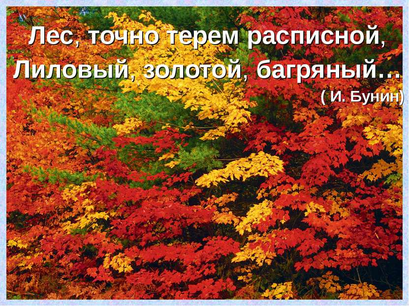 Лес,точнотеремрасписной, Лиловый,золотой,багряный… ( И. Бунин)