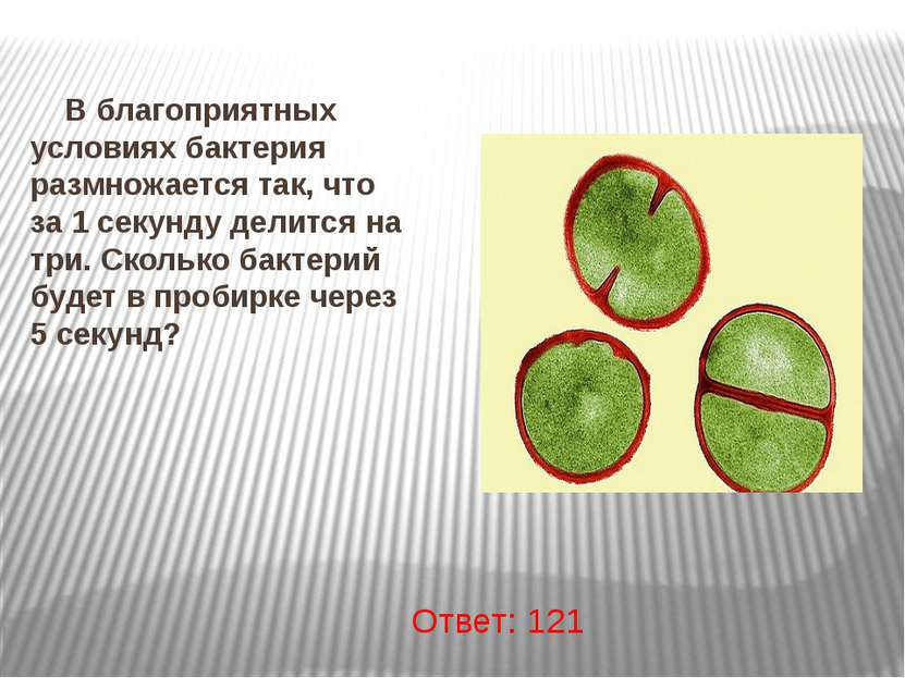 В благоприятных условиях бактерия размножается так, что за 1 секунду делится ...