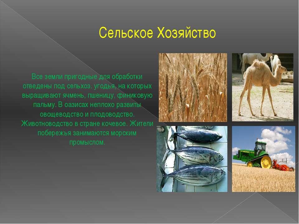 Сельское Хозяйство Все земли пригодные для обработки отведены под сельхоз. уг...