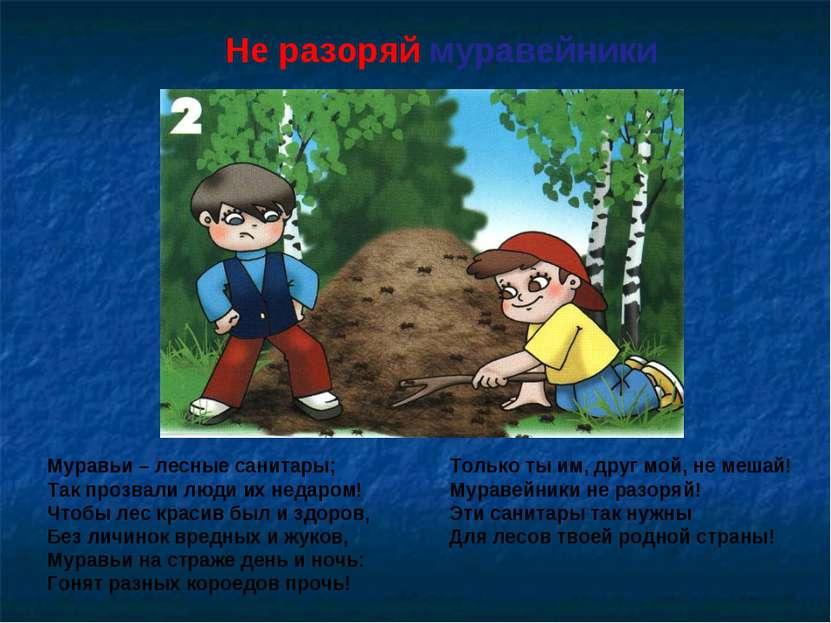 Не разоряй муравейники Муравьи – лесные санитары; Так прозвали люди их недаро...