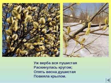 Уж верба вся пушистая Раскинулась кругом; Опять весна душистая Повеяла крылом.