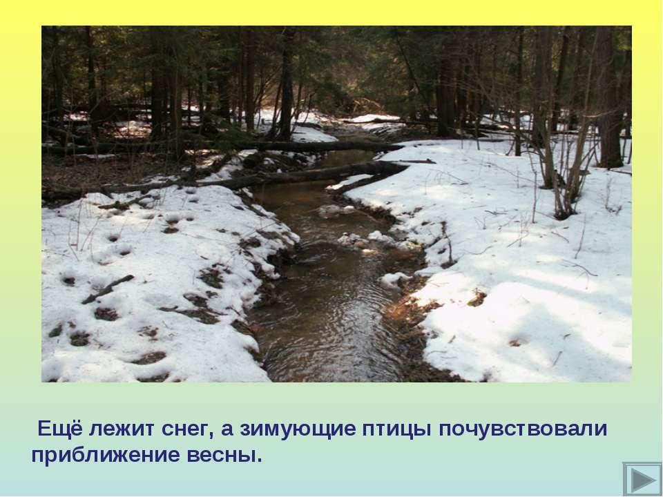 Ещё лежит снег, а зимующие птицы почувствовали приближение весны.