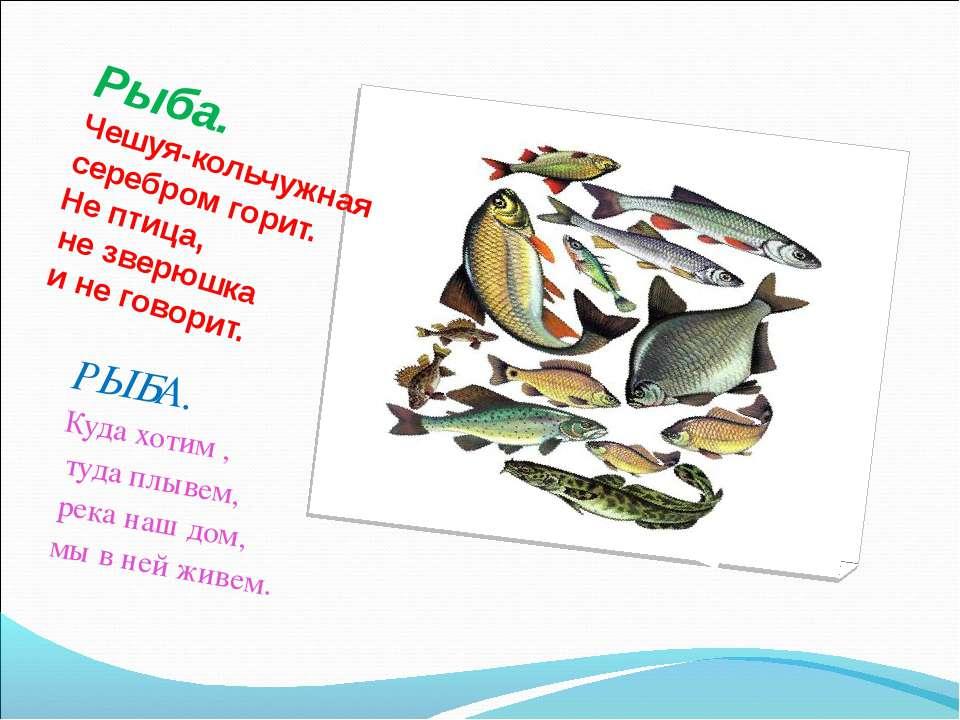 Рыба. Чешуя-кольчужная серебром горит. Не птица, не зверюшка и не говорит. РЫ...