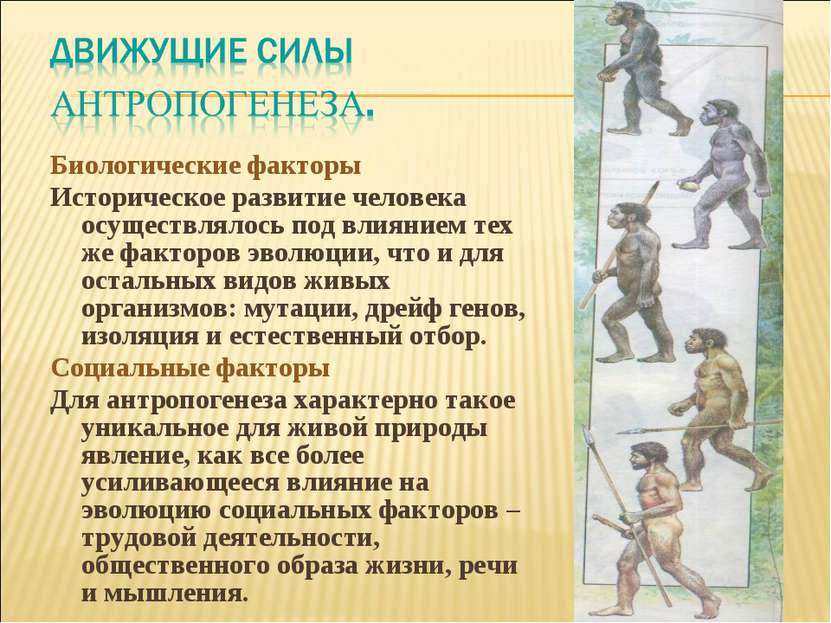Биологические факторы Историческое развитие человека осуществлялось под влиян...