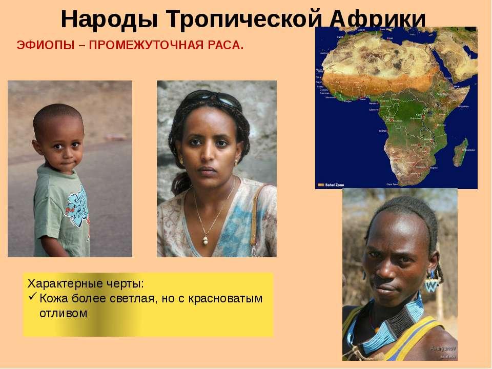 Народы Тропической Африки ЭФИОПЫ – ПРОМЕЖУТОЧНАЯ РАСА. Характерные черты: Кож...