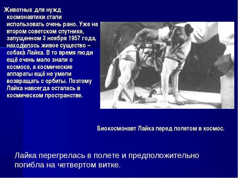 Биокосмонавт Лайка перед полетом в космос. Животных для нужд космонавтики ста...