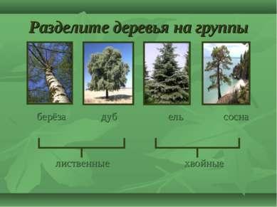 Разделите деревья на группы берёза дуб ель сосна лиственные хвойные