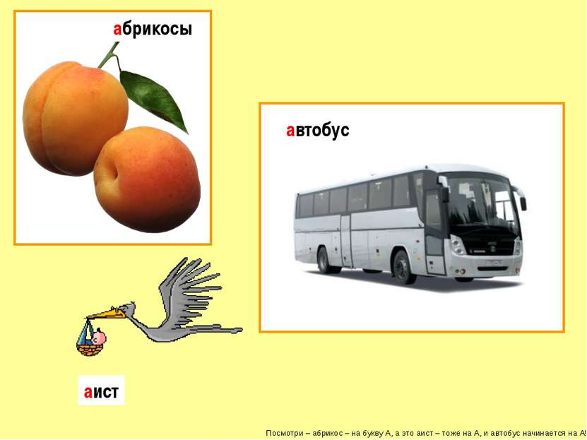 Посмотри – абрикос – на букву А, а это аист – тоже на А, и автобус начинается...