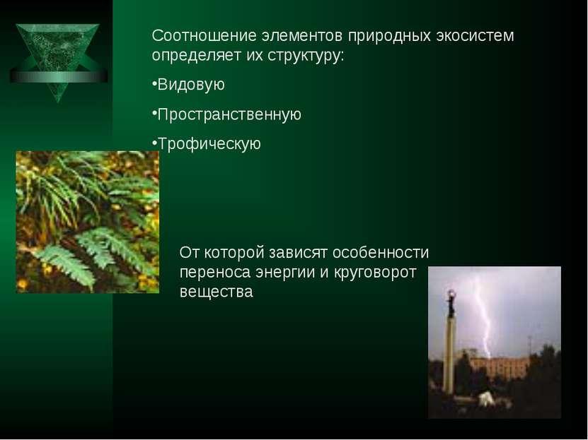 Соотношение элементов природных экосистем определяет их структуру: Видовую Пр...