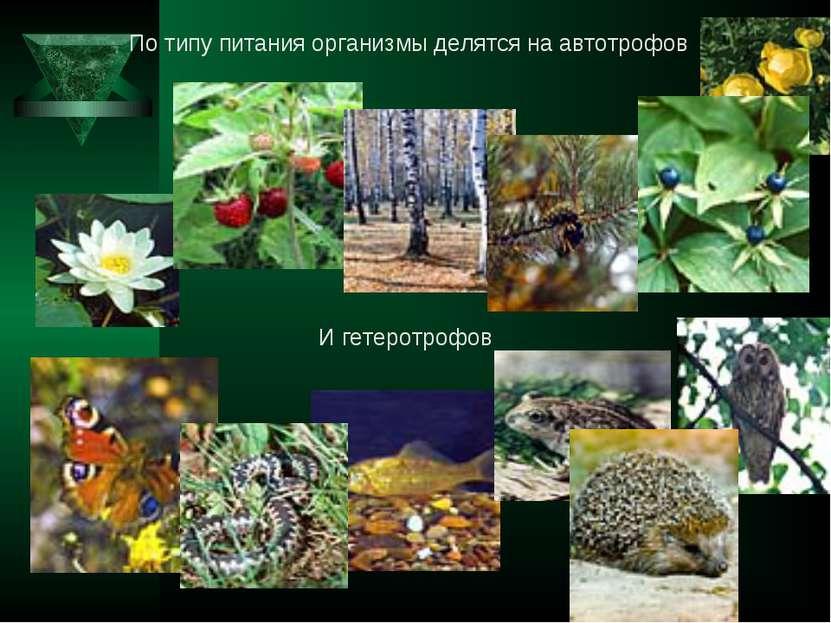 По типу питания организмы делятся на автотрофов И гетеротрофов