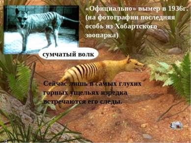 сумчатый волк «Официально» вымер в 1936г. (на фотографии последняя особь из Х...